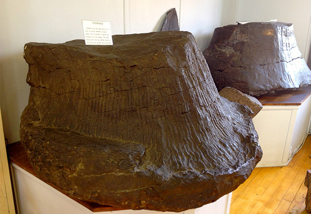 rutgers-geology-museum-cook-collection