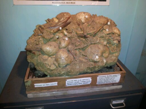 Cretaceous Fossils of the Atlantic Coastal Plain in The Collection of the Monmouth Amateur Paleontologist's Society