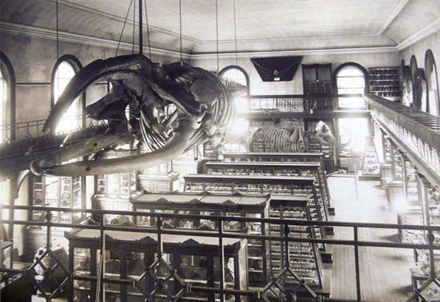 rutgers-geology-museum-historic-whale