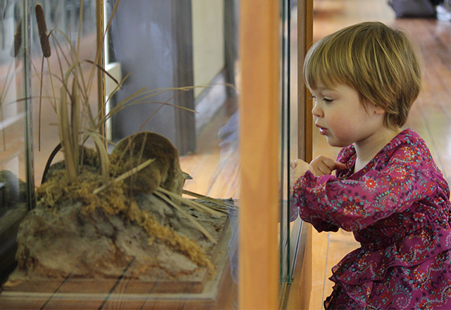 child looking at exhibit