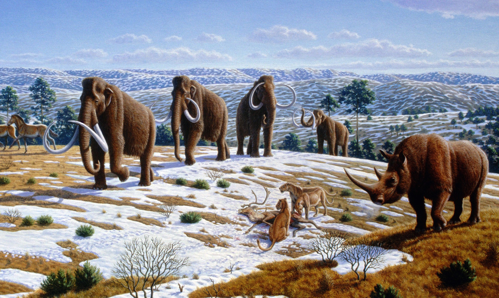 Image of Mammoths, Saber Tooth Cats and a Woolly Rhino